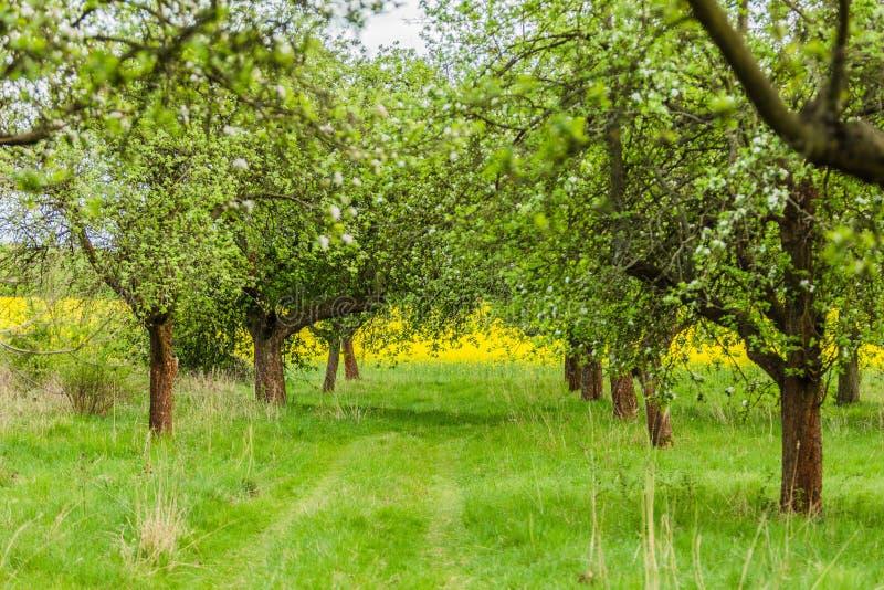 Lantligt landskap för vår med gröna träd royaltyfri foto
