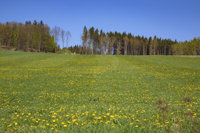 Lantligt landskap f?r v?r i Tjeckien royaltyfri foto