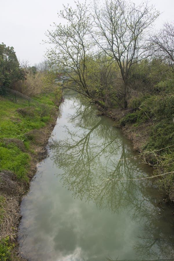 Lantligt landskap, flodgräs och pil royaltyfri foto