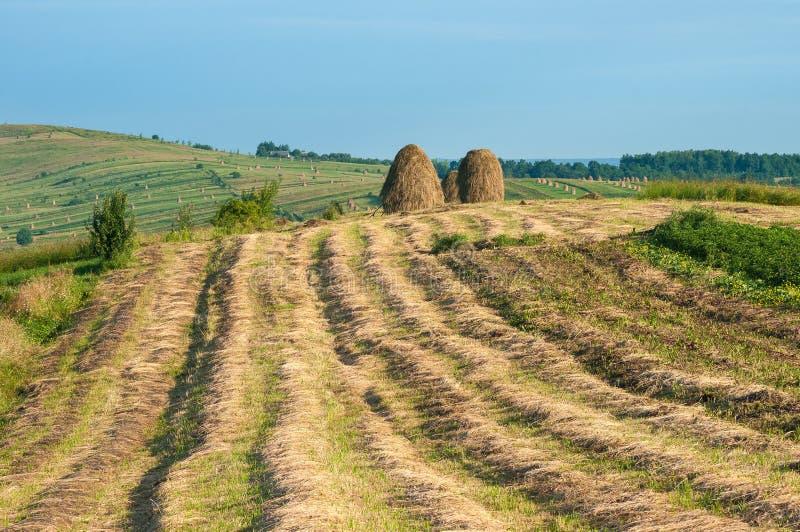 Lantligt landskap; hej rullar på fältet på berget i Ukraina fotografering för bildbyråer