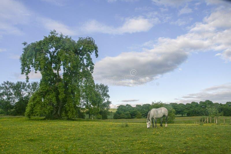 Lantligt landskap i Gretna gräsplan, Skottland arkivbild
