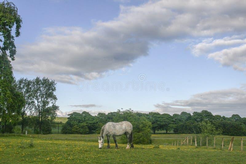 Lantligt landskap i Gretna gräsplan, Skottland arkivfoton