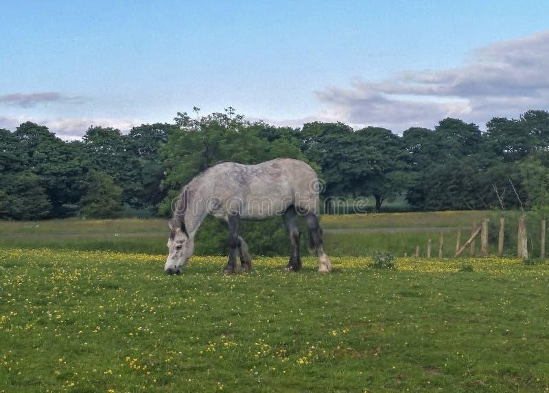 Lantligt landskap i Gretna gräsplan, Skottland arkivfoto