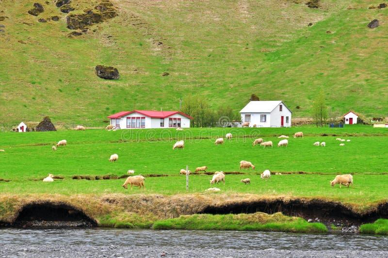 Download Lantligt landskap i Island arkivfoto. Bild av oklarhet - 37344858