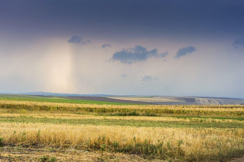 Lantligt landskap i Moldavien med fält av havre och solrosen på solnedgången arkivbild