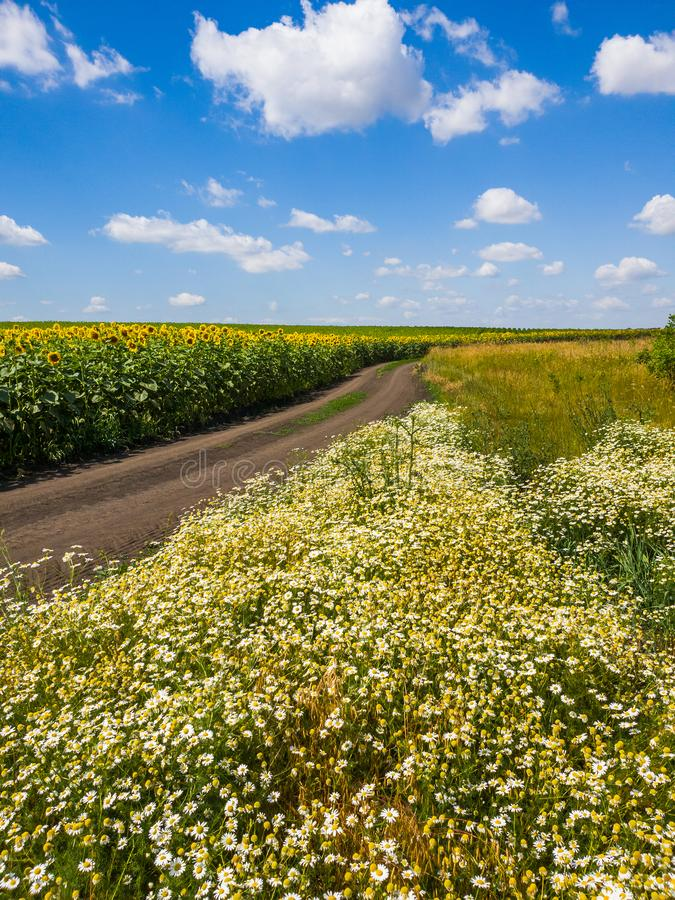 Lantligt landskap med blommor, vägen och fältet med solrosen, Ryssland arkivfoto