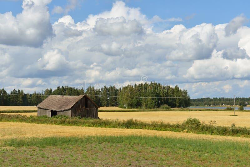 Lantligt landskap med det guld- fältet och ladugården royaltyfri bild