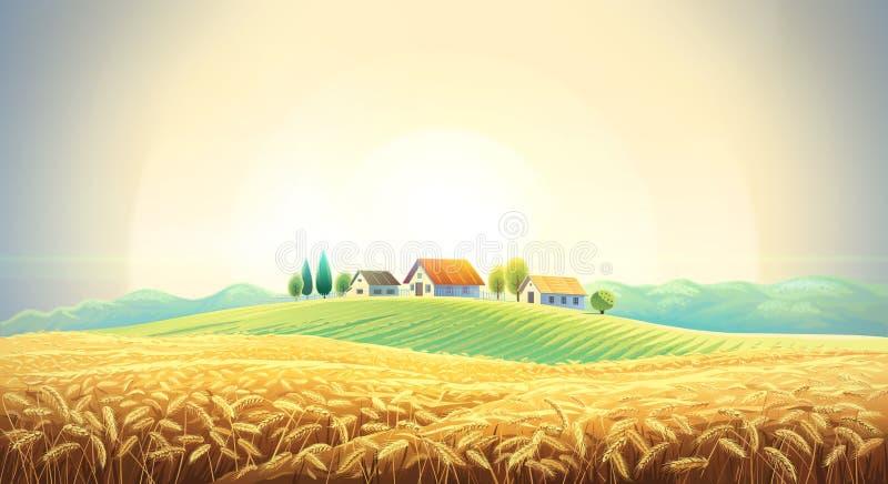 Lantligt landskap med ett vetefält royaltyfria bilder