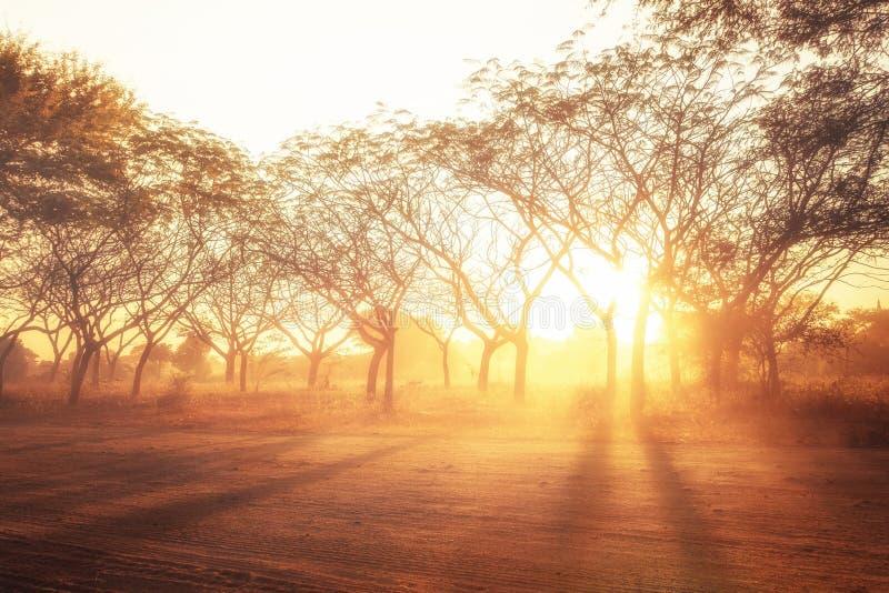 Lantligt landskap med glänsande solnedgångstrålar Abstrakt natur royaltyfri foto