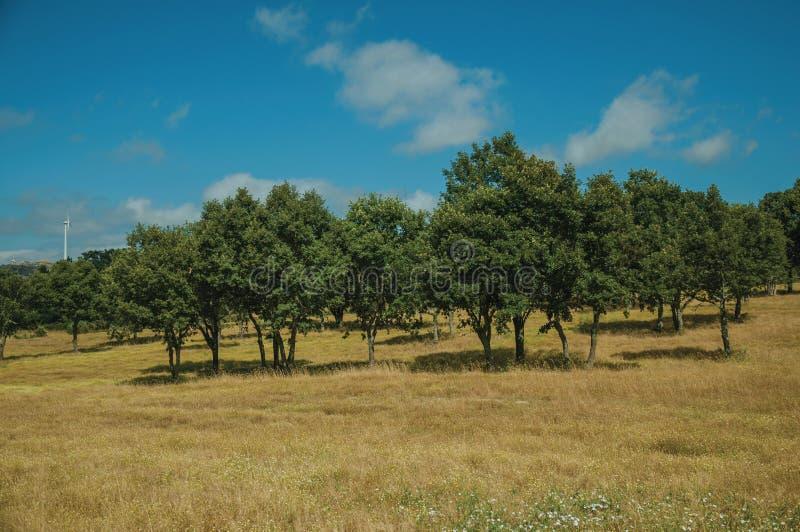 Lantligt landskap med gröna träd på ett lantgårdfält royaltyfri foto