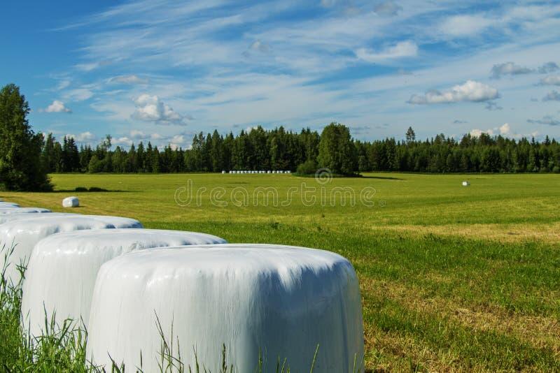 Lantligt landskap med härliga fält och rullar av hö i den vita filmen royaltyfri foto
