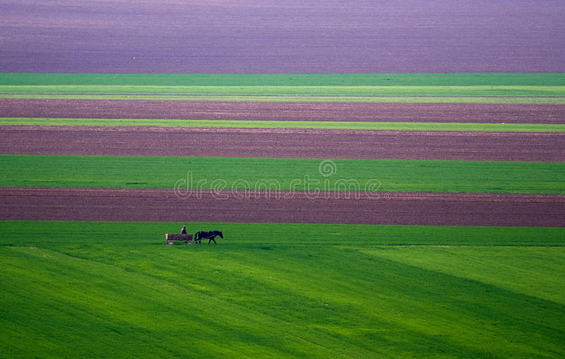 Lantligt landskap med trävagnen på gröna fieds i vår royaltyfria bilder