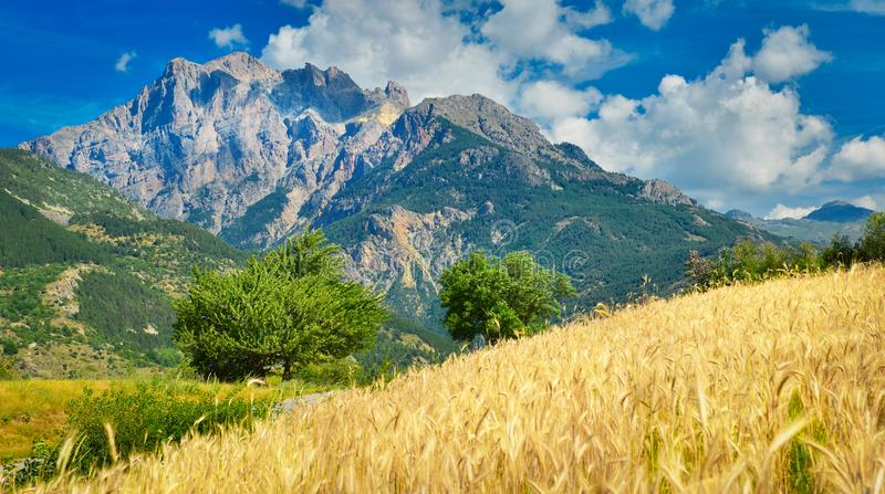 Lantligt landskap med vetefältet, Provence, Frankrike arkivfoton