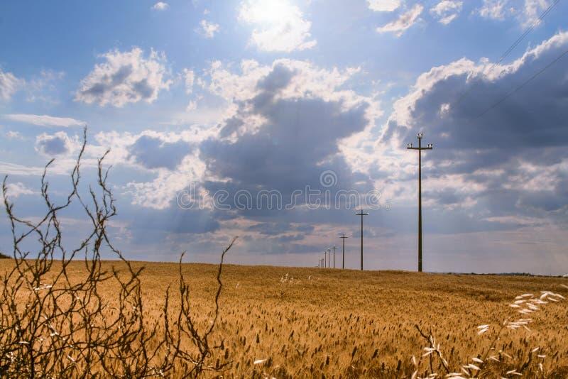 Lantligt landskap med vetefältet som domineras av molnet, Apulia, Italien royaltyfri fotografi