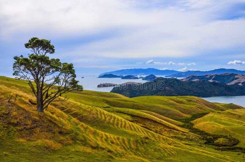 Lantligt landskap, Nya Zeeland arkivfoto
