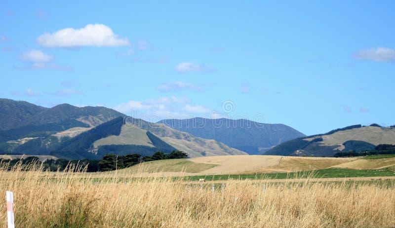 Lantligt landskap Nya Zeeland arkivbilder