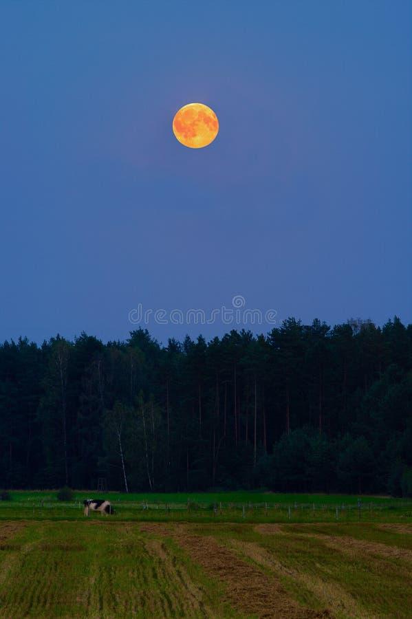 Lantligt landskap på natten med den röda blodfullmånen som stiger över skog och äng arkivfoton