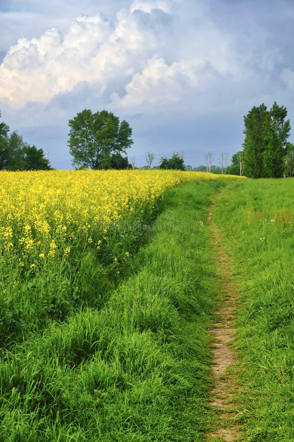 Lantligt landskap på våren i Brianza Italien arkivbild