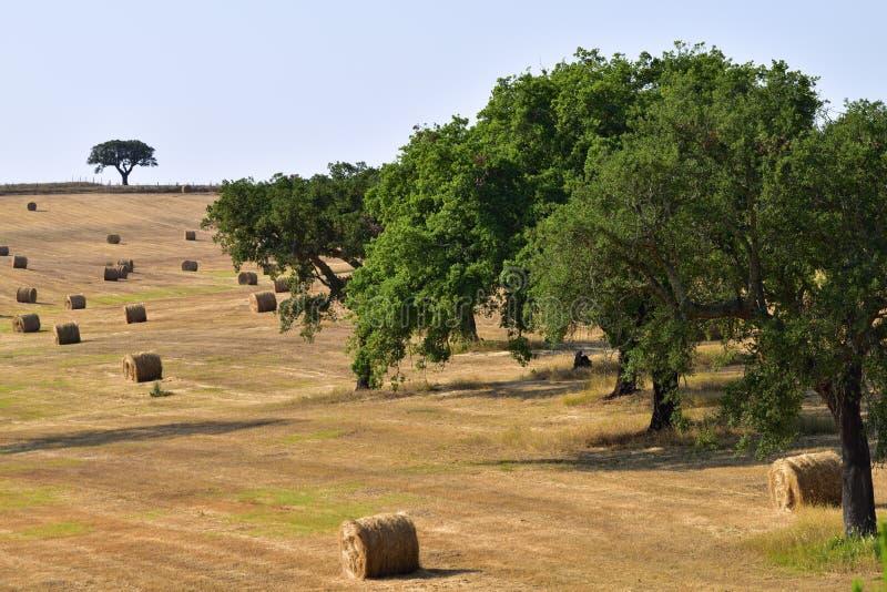 Lantligt landskap, Portugal fotografering för bildbyråer