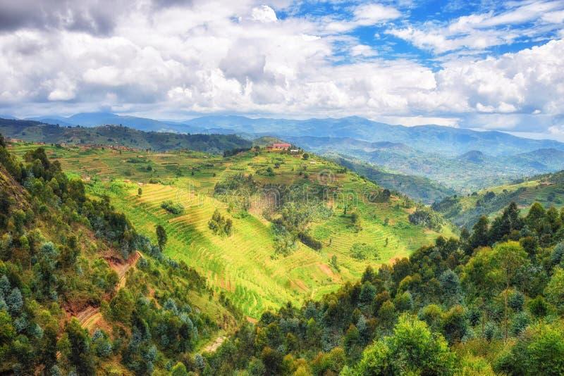 Lantligt landskap Rwanda royaltyfria bilder