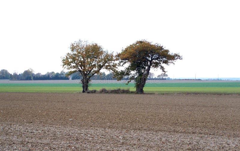 Lantligt landskap, två träd i mitt av ett fält arkivbilder
