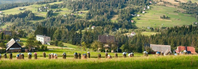 Lantligt landskapbaner för sommartid, panorama - buntar av mejat hö mot bakgrunden av berg västra Carpathians arkivfoton