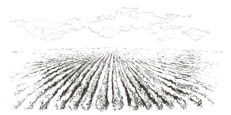 Lantligt landskapfält Hand tecknad vektorillustration Apple v?rtr?dg?rd Inrista stil royaltyfri foto