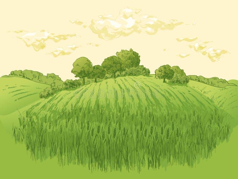 Lantligt landskapf?ltvete F?r vektorbygd f?r hand utdragen illustration f?r stil f?r gravyr f?r landskap arkivfoto