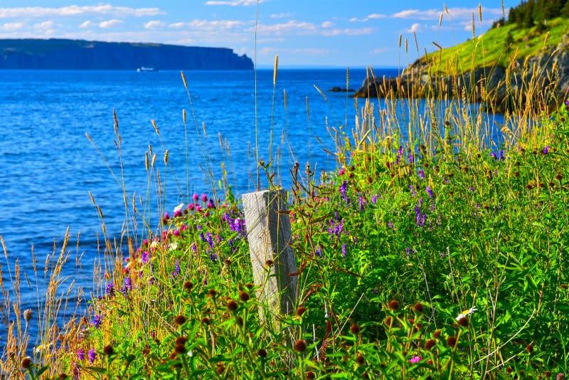 Lantligt sjösidalandskap på den Portugal lilla viken - St Philip, Newfoundland, Kanada royaltyfri bild
