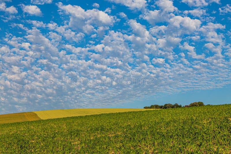 Lantligt Sussex landskap arkivfoton