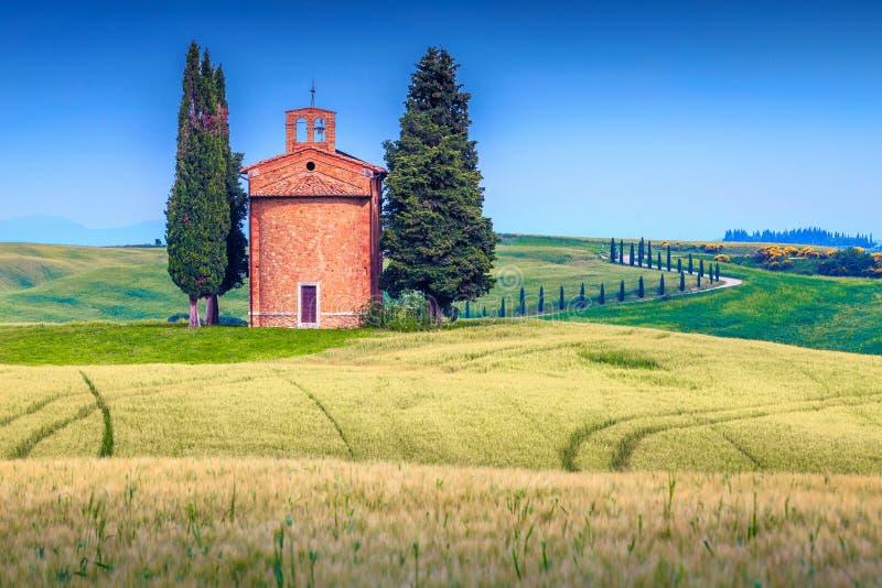Lantligt Vitaleta kapell och kornfält i sommar, Tuscany, Italien arkivfoton