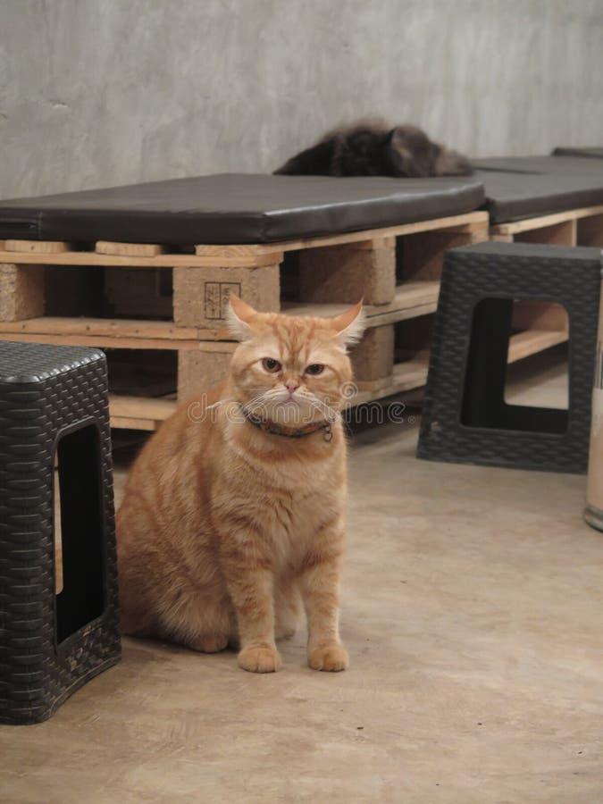 Lanugine del gatto fotografie stock libere da diritti