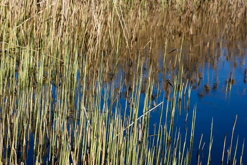 Lanzamientos del agua azul y del verde en el agua foto de archivo
