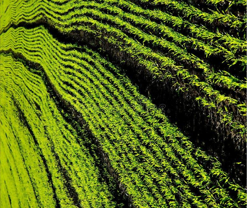 Lanzamientos del verde imagenes de archivo