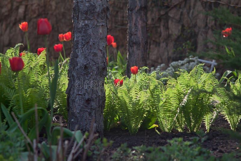 Lanzamientos jovenes del helecho en macizo de flores foto de archivo