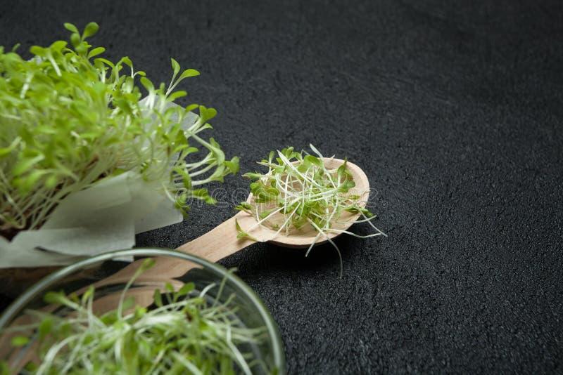 Lanzamientos micro-verdes frescos de la ensalada de la lechuga para una cocina vegetariana sana El concepto de desintoxicación, d foto de archivo
