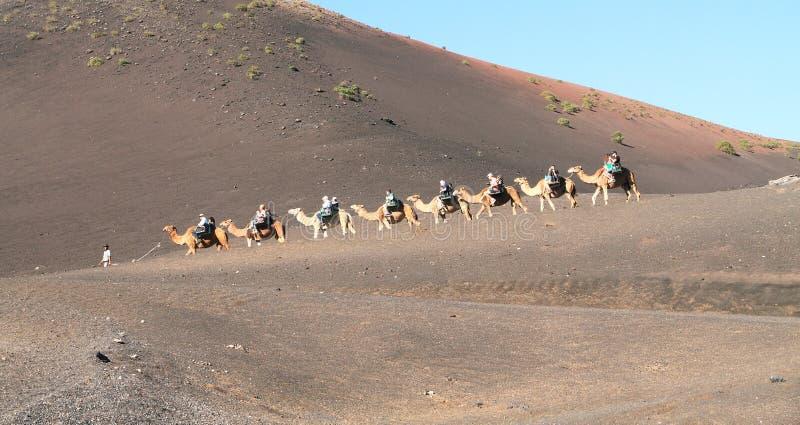 Lanzarote, Canarische Eilanden: De Caravan van de toeristendromedaris in het Nationale Park van Timanfaya royalty-vrije stock afbeeldingen