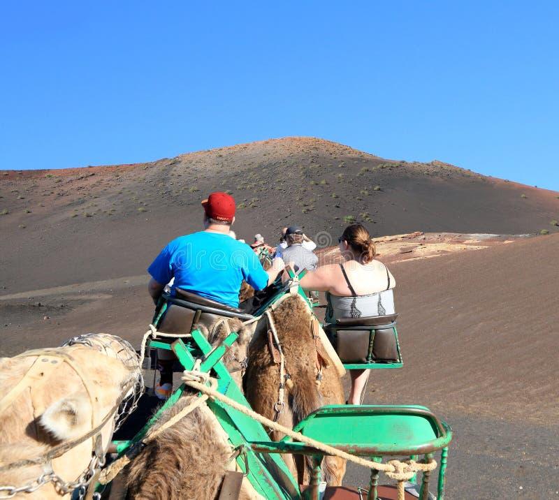 Lanzarote, Canarische Eilanden: Toeristen die het Nationale Park van Timanfaya op Dromedarissen ingaan stock afbeelding
