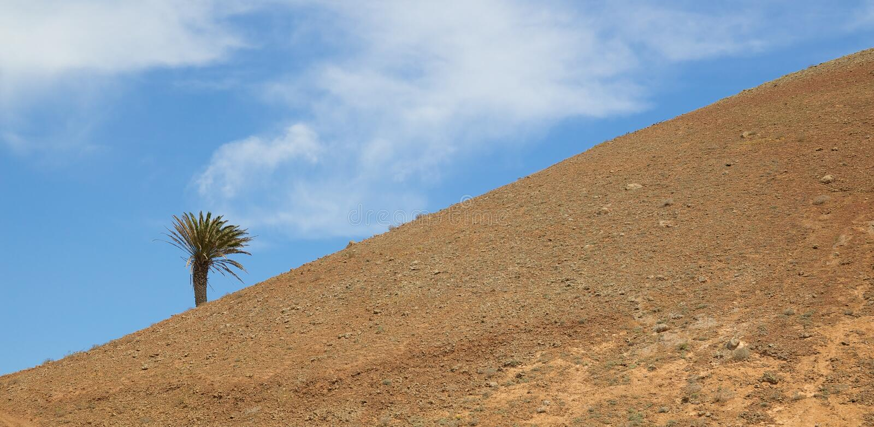 Lanzarote Hill and Palm 1 stock photos