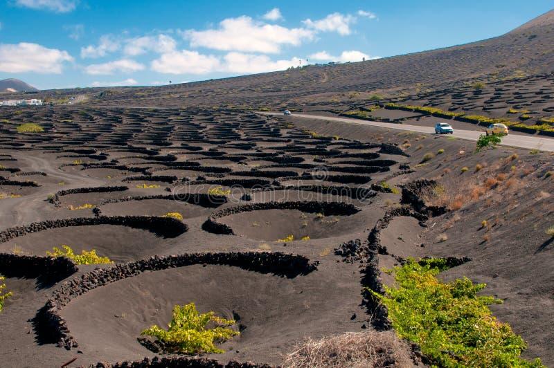 Lanzarote-Inselweinberglandschaft stockbilder