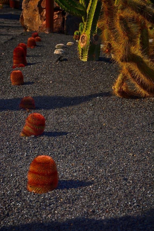 Lanzarote, Jardin de Cactus, κάκτοι που αυξάνεται στο ηφαιστειακό μαύρο έδαφος στοκ εικόνες