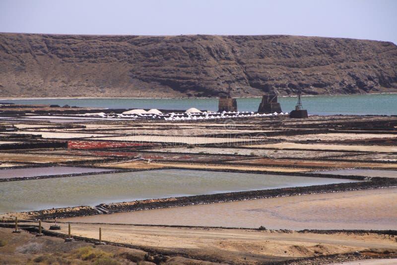 Lanzarote - Salinas de Janubio: Panoramautsikten över konstgjord tips för saltar extraktion från Atlantic Ocean royaltyfri bild