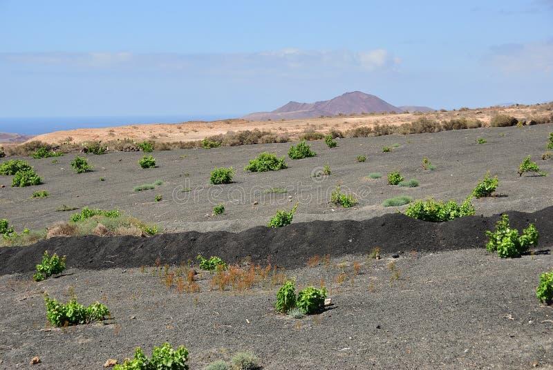 Lanzarote wie? wyspa kanaryjska Tenerife Hiszpania obraz royalty free