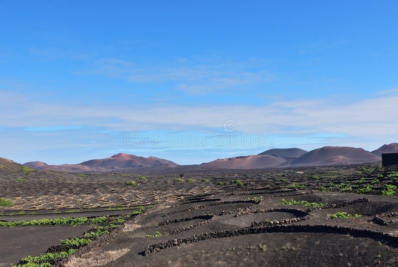 Lanzarote winnicy wyspa kanaryjska Tenerife Hiszpania obraz stock