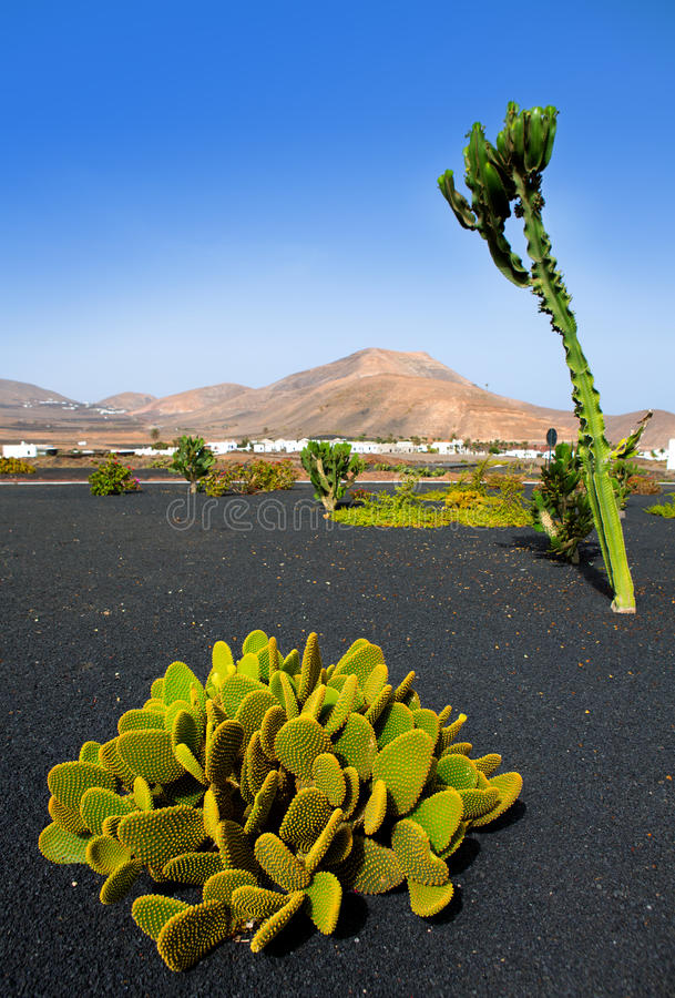 Lanzarote Yaiza avec le cactus et les montagnes photo libre de droits