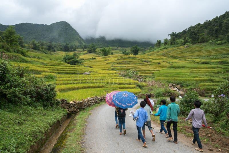 Lao Cai, Vietnam - 30 Augustus, 2017: Terrasvormig padieveldlandschap in het oogsten van seizoen met schoolkinderen die op curver royalty-vrije stock fotografie