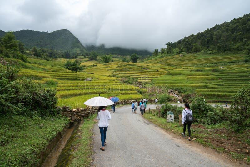 Lao Cai, Vietnam - 30 de agosto de 2017: Paisaje colgante del campo del arroz en la cosecha de la estación con los alumnos que ca imagenes de archivo