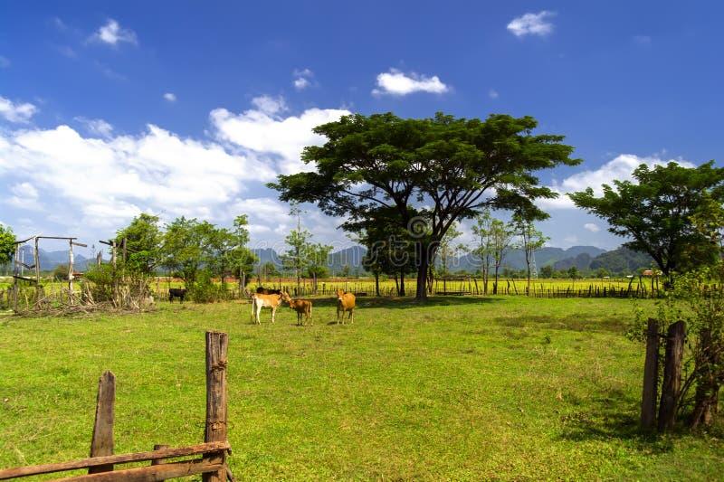 Lao Farm royalty-vrije stock afbeelding