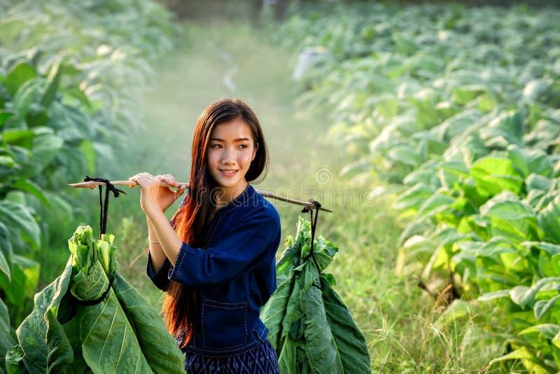 Laofrauen tragen Tabakblatt, um zu vermarkten lizenzfreies stockbild