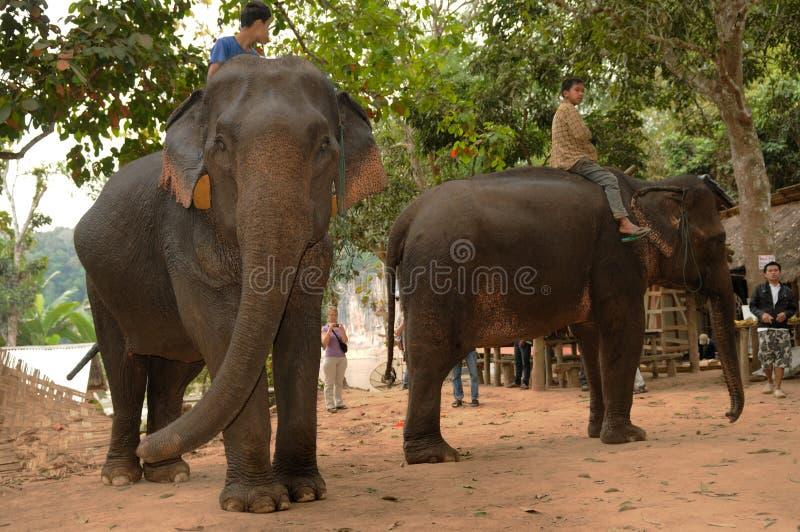 Laos: Twee Aziatische olifanten met Mahouds die op toeristen wachten stock foto's